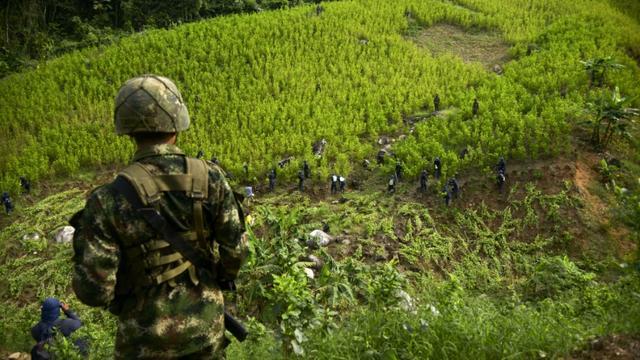 Un champ de coca près de Medellin en Colombie en septembre 2014 [Raul Arboleda / AFP]