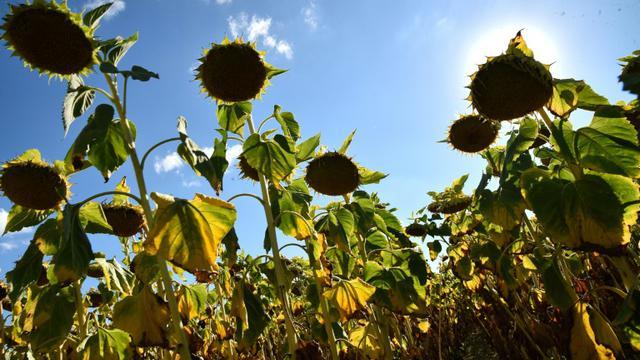 L'année 2018 devrait figurer au 4e rang des plus chaudes jamais enregistrées, a alerté jeudi l'ONU, avertissant de l'extrême urgence de la situation  [JEAN-FRANCOIS MONIER              / AFP/Archives]