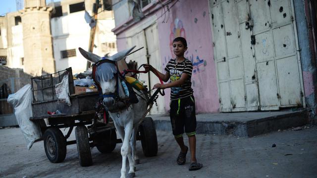 Un jeune Palestinien mène son âne dans les rues de Jabalia le 14 août 2014 [Roberto Schmidt / AFP]