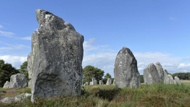 Des menhirs sur le site de Carnac, le 22 août 2014 [Miguel Medina / AFP]