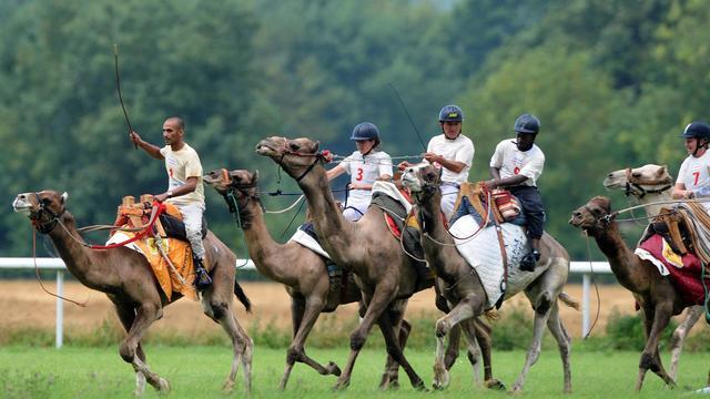 Des jockeys disputant le championnat de France de course sur dromadaires, sur l'hippodrome de La Chartre-sur-le-Loir (Sarthe), le 10 août 2014  [Jean-François Monier / AFP]