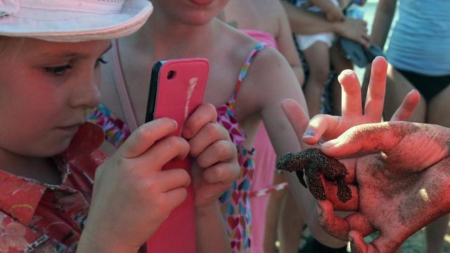 C'est la fin de l'été: des centaines de bébés tortues de mer naissent sur les côtes chypriotes, pour le plus grand bonheur des touristes et des responsables de la protection de l'environnement. [AFP]