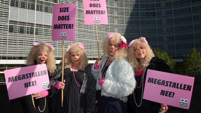 """Des manifestants déguisés en cochons à Bruxelles pour demander une """"agriculture paysanne"""" [John Thys / AFP]"""