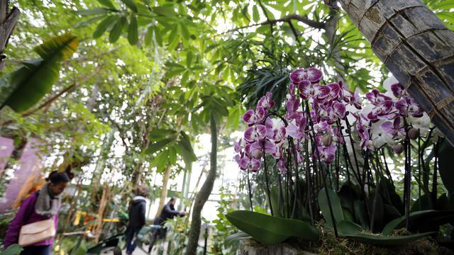 Printemps des orchidées au Jardin des Plantes | www.cnews.fr