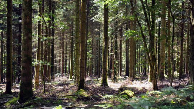 La forêt de Brocéliande [Marcel Mochet / AFP/Archives]