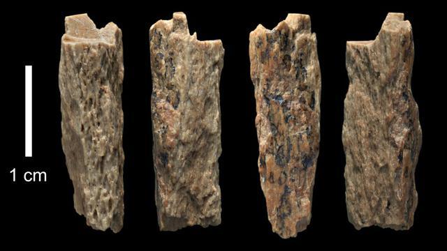 """Cette photo prise le 14 juin 2015 et obtenue de l'Université d'Oxford/Institut Max Planck le 22 août 2018 montre un fragment d'os de """"Denisova 11"""" découvert en 2012 par des Russes dans les montagnes de l'Altaï en Sibérie [Ian Cartwright / UNIVERSITY OF OXFORD/Max Planck Institute/AFP]"""