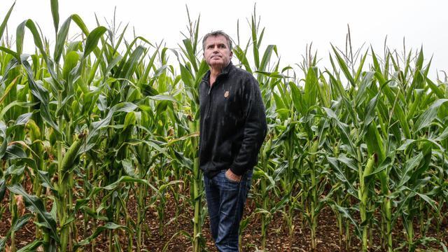 L'agriculteur Paul Francois, dans ses champs de céréales de Bernac, le 28 juillet 2015 [Thibaud MORITZ / AFP/Archives]