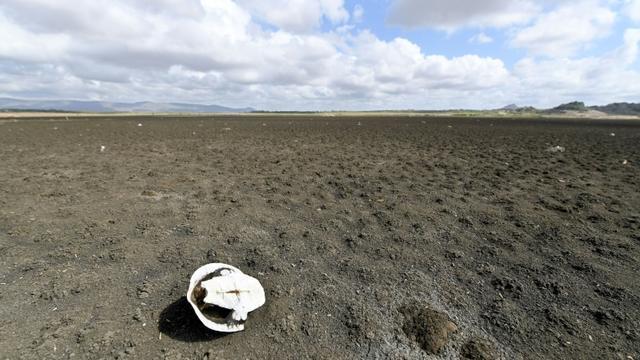 Carapace d'une tortue sur le sol asséché du barrage de Cedro, plus ancien du Brésil, dans la ville de Quixadá (État de Ceara), le 8 février 2017 [EVARISTO SA / AFP/Archives]
