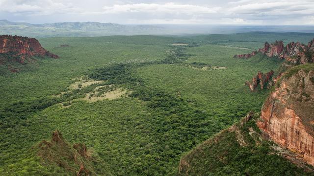 Le cétacé a été découvert à 15 mètres de la plage, près de l'embouchure du fleuve Amazone, au beau milieu de la jungle.