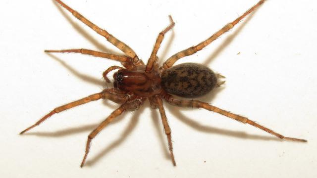 L'homme a tenté de tuer l'araignée avec une torche faite maison.