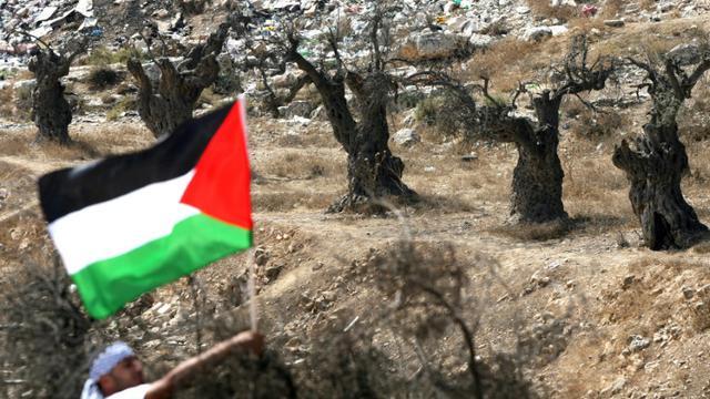 Un homme brandit un drapeau palestinien dans un champs d'oliviers à Hébron Hébron en Cisjordanie occupée, le 16 octobre 2010 [Hazem Bader / AFP]