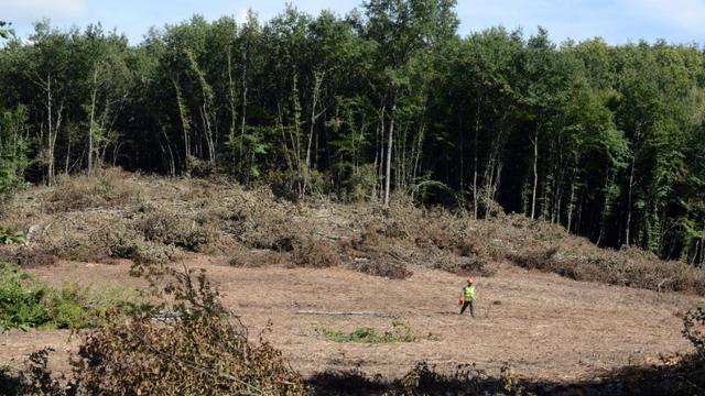 La forêt de Sivens près de Gaillac, dans le Tarn, en septembre 2014, lieu choisi pour la construction d'un barrage controversé [REMY GABALDA / AFP/Archives]
