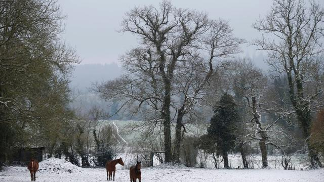 Des chevaux dans un champ enneigé, le 19 mars 2018 à Roucamps, dans le Calvados [CHARLY TRIBALLEAU / AFP]