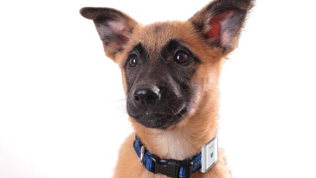 Le système de Bewellconnect permet de suivre son chien et son activité.