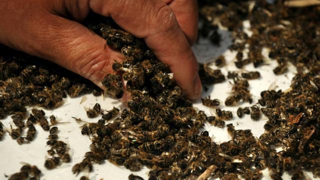 Les pesticides néonicotinoïdes tuent les abeilles [Nikolay DOYCHINOV / AFP/Archives]