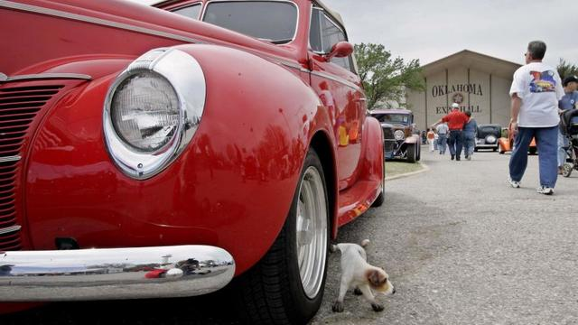 L'odeur des pneus chauds rappellent aux chiens celles de leur urine.