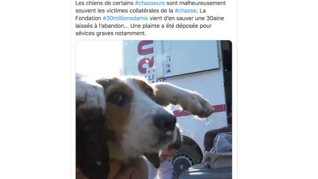 Dordogne Une Trentaine De Chiens De Chasse Maltraites Retrouves Dans Un Bois Cnews