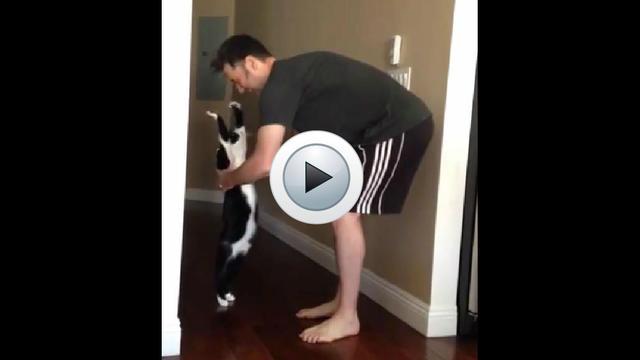 Le chat s'étire au maximum lorsque son maître le prend dans ses bras.