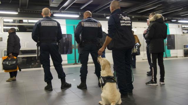 Vingt brigades de cyno-détection (chiens renifleurs) seront bientôt déployées sur l'ensemble du réseau.