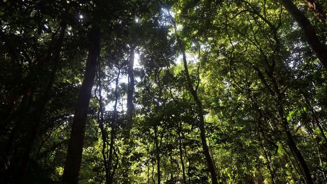 Forêt de Barro Colorado au Panama, le 23 novembre 2015 [RODRIGO ARANGUA / AFP]