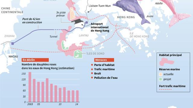 Infographie sur les dauphins roses de Hong Kong menacés de disparition [Nick Shearman / AFP]