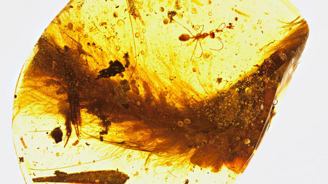 Echantillon d'ambre