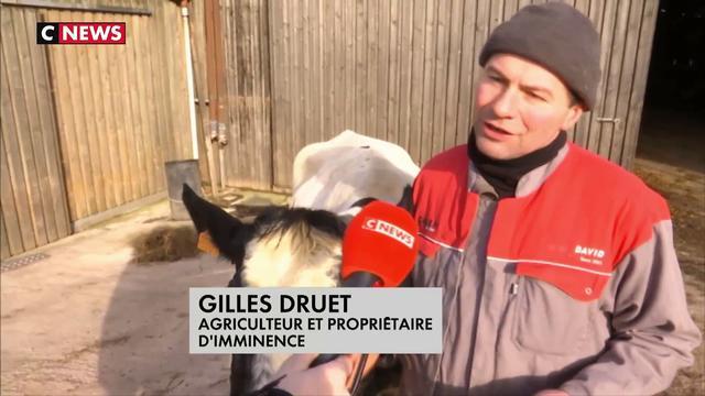 Une vache Bleue du Nord star du Salon de l'Agriculture