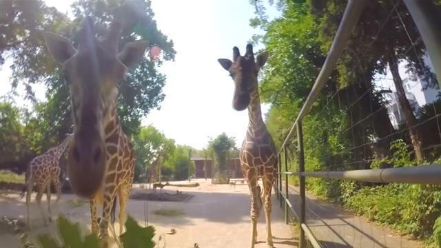Dans la peau d'un soigneur du zoo