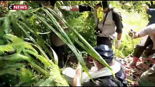 Indonésie : sauvetage d'un orang-outan grièvement blessé par des villageois