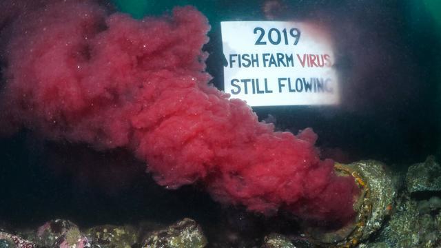 Les poissons se font de plus en plus rares dans ces eaux.