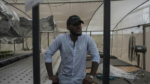 Peter Okocha Junior, fondateur de PS Nutrac montre les serres où il cultive en aéroponie, le 5 juin 2018 à Wasinmi, près d'Abeokuta, au Nigeria [STEFAN HEUNIS / AFP]