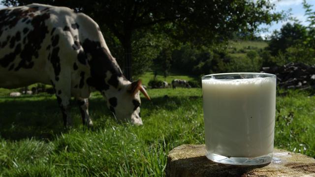 Une vache et un verre de lait [Mychele Daniau / AFP/Archives]