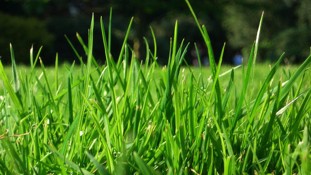 Rares sont les Français à avoir retrouvé leur pelouse en bon état au retour des vacances