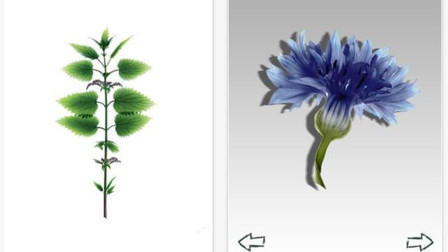 L'Herbier digital permet de se constituer sa propre collection de plantes sur son mobile.