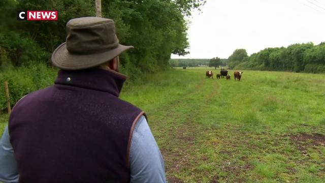 Royaume-Uni : un vétérinaire prend soin des vaches... en chantant