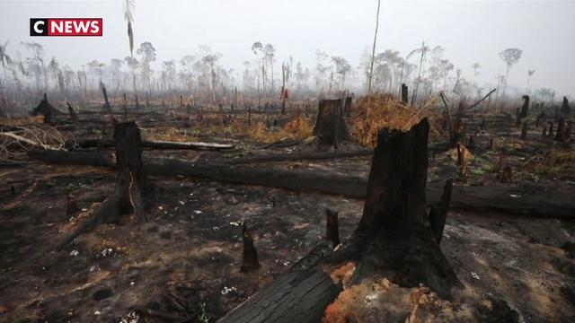 Un fond international pour l'Amazonie