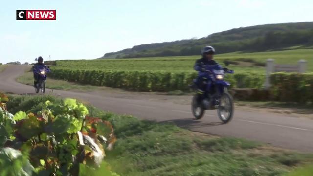 Bourgogne : contre le pillage des vignobles, les gendarmes veillent au grain
