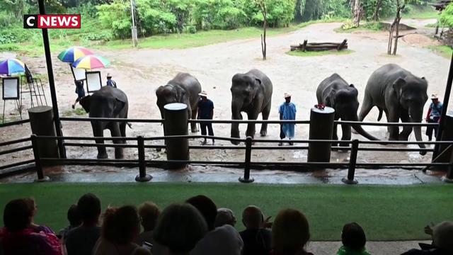 """Thaïlande : les """"sanctuaires d'éléphants"""", entre enfer et paradis pour pachydermes"""