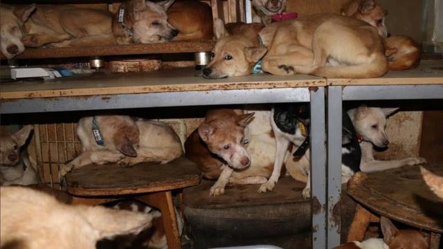 Video 164 Chiens Affames Decouverts Dans Une Maison De 30m2 Cnews