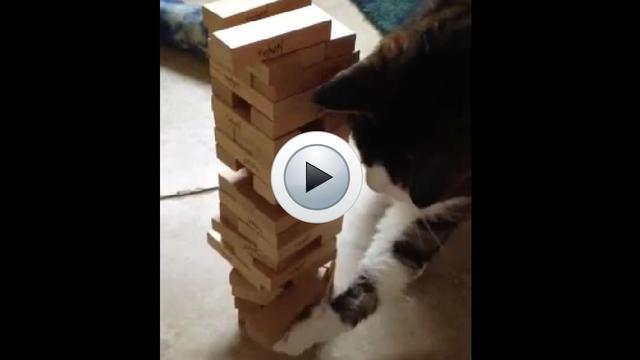 Le chat utilise son museau et ses pattes pour battre son maître au Jenga.