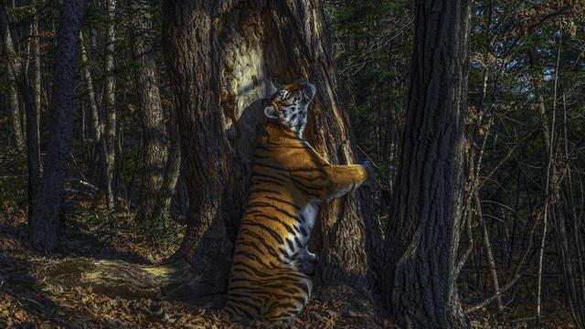 Decouvrez Les 10 Plus Belles Photos D Animaux Sauvages De L Annee Cnews