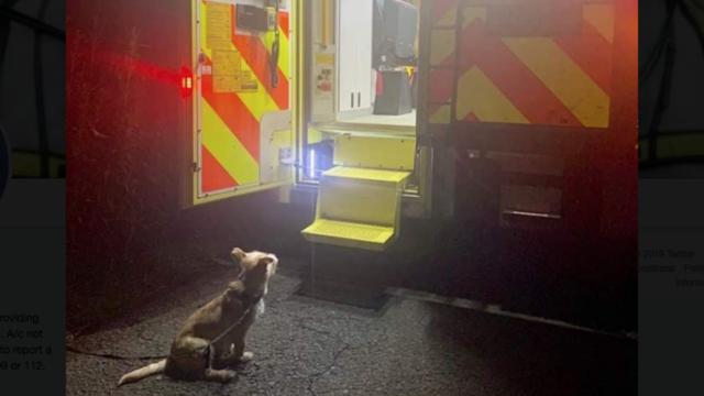 Le chien a sagement patienté, attendant que les secours prennent en charge son maître.