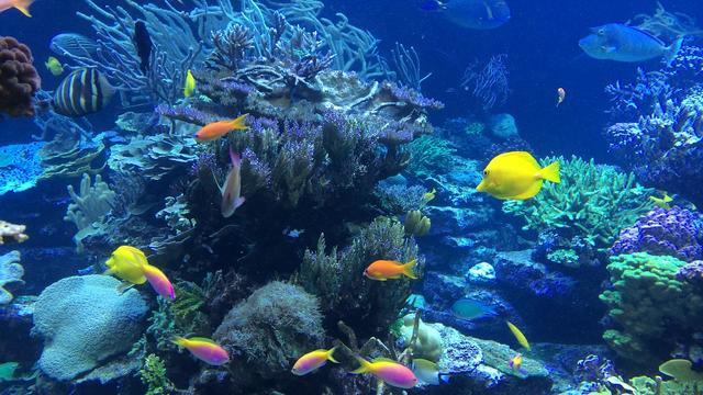 Les poissons boivent ils de l eau - Image poissons ...