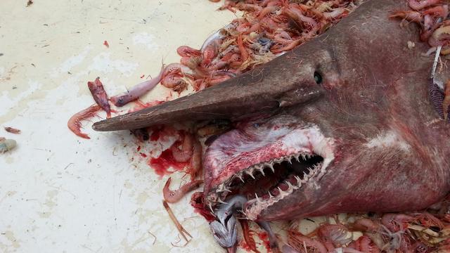 Le pêcheur a relâché l'animal après l'avoir pris en photo.