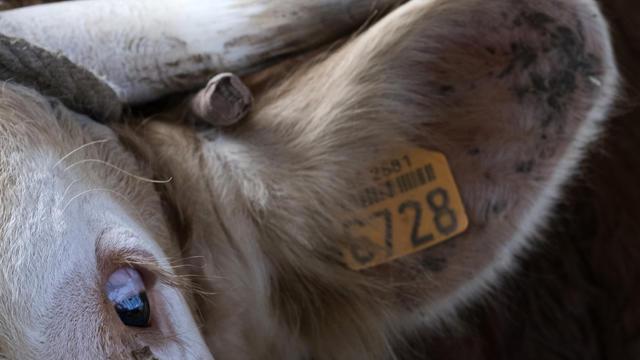 Dix balles de calibres de 5.56 mm ont été utilisées pour abattre l'animal qui semblait très agité. (photo d'illustration)