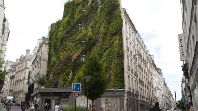 Un mur végétalisé.