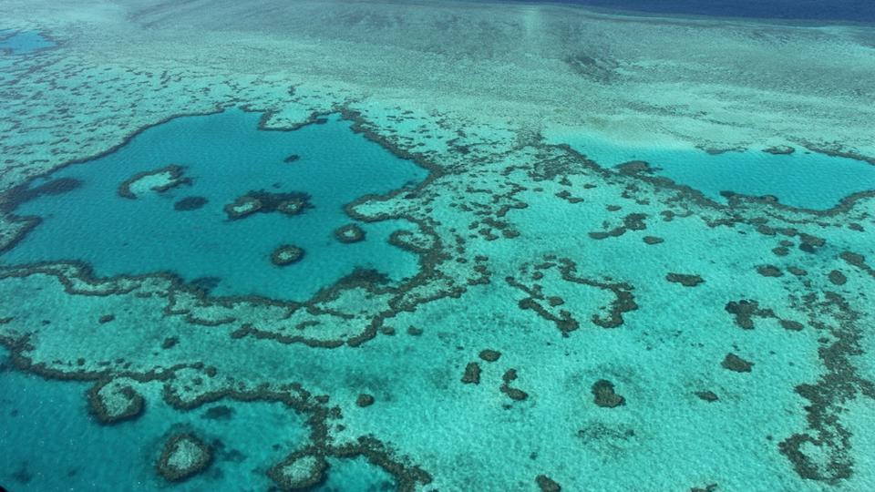 Pourquoi l'Australie et l'Unesco s'affrontent à propos de la Grande Barrière de corail