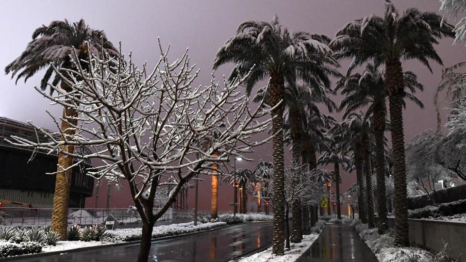 Les rues et les palmiers de Las Vegas prennent un coup de froid. Par endroits, il est tombé jusqu'à 20 centimètres de neige.