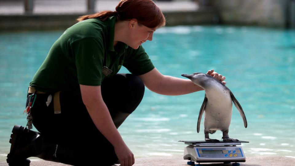 Le zoo de Londres fût le premier aquarium public, créé en 1853. Aujourd'hui encore les visiteurs viennent admirer pingouins ou autres poissons.
