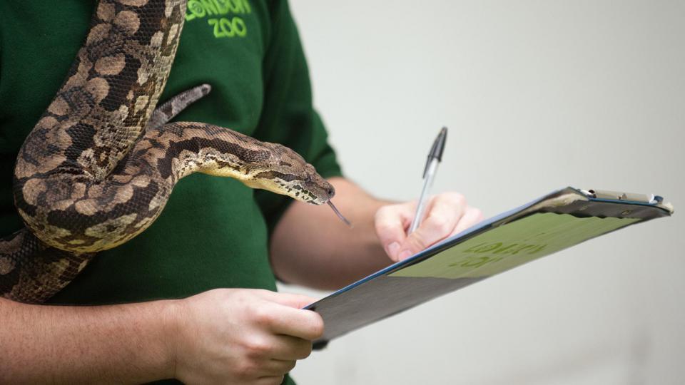 Le zoo abrite la plus grande collection de serpents venimeux et reptiles du Royaume-Uni.